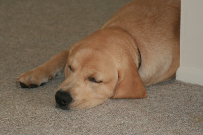 Dozing puppy