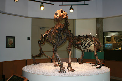 Western Horse & Shortfaced bear fossil