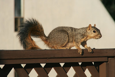 WEHO squirrel
