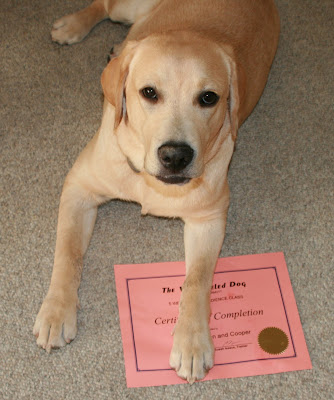 Cooper's puppy training certificate