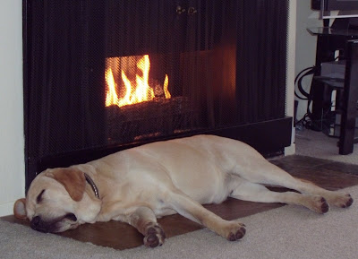 Pup Cooper asleep by the fireplace