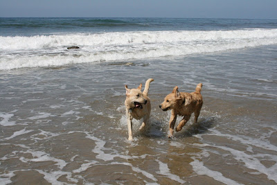 Santa Babara Dog Beach puppy pals