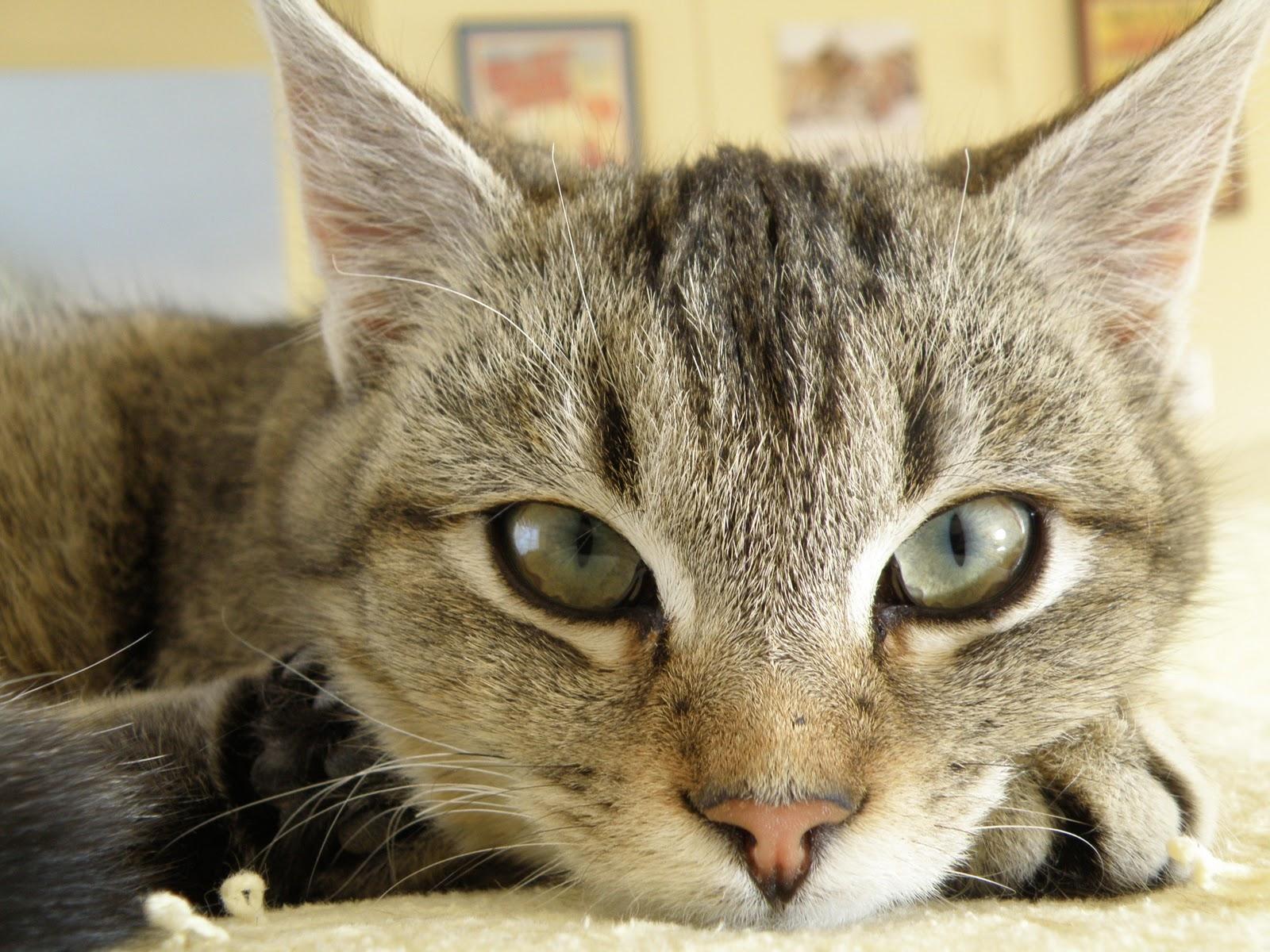 Vibrating Plate Cat Litter