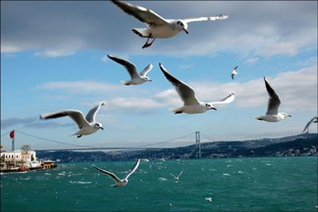 rüzgara karşı uçmak