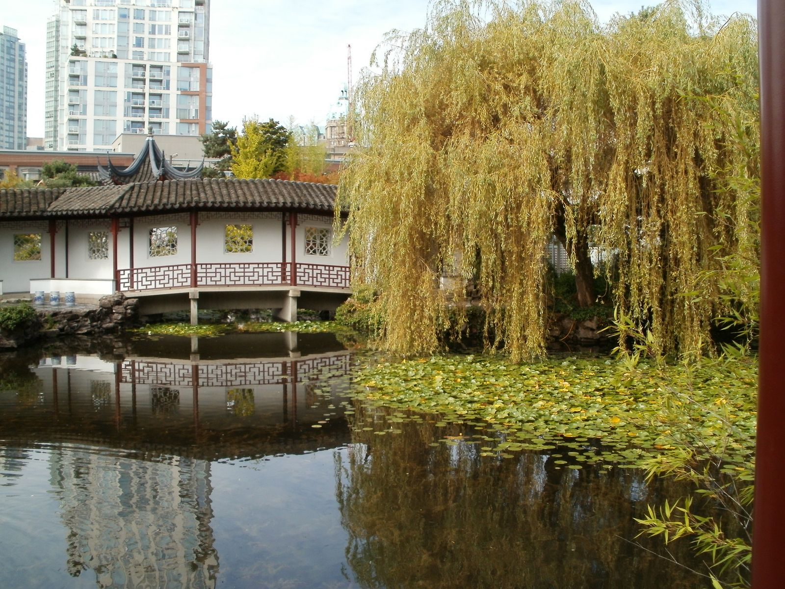 Mark\'s Veg Plot: The Sun Yat Sen Garden, Vancouver