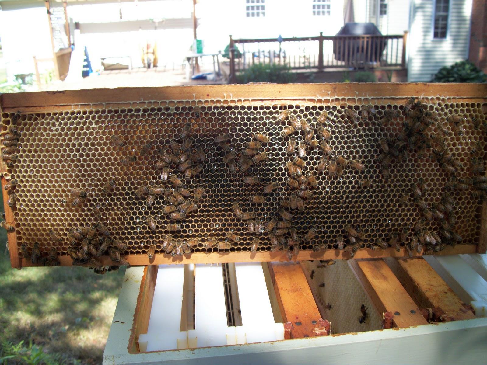 steven u0026 39 s bees  recent inspections