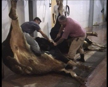 This Is What Humane Slaughter Looks Like. Is It Good Enough?