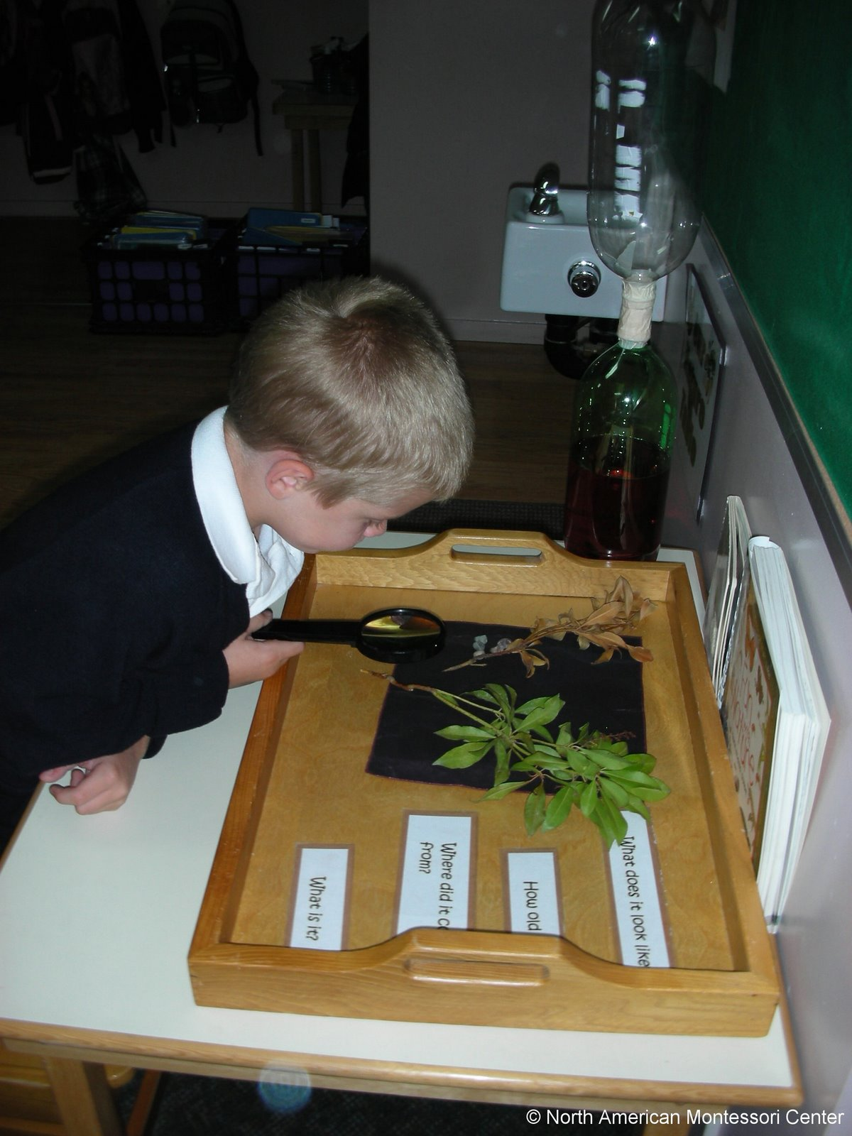 student achievement NAMC montessori classroom grading boy with plants