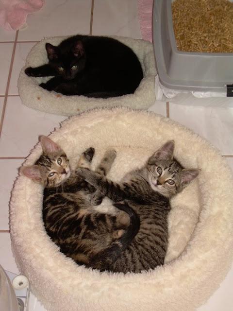 [061109_Kittens.jpg]