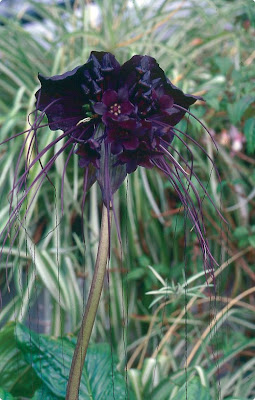 Garden Glitter More Black Magic For Your Garden