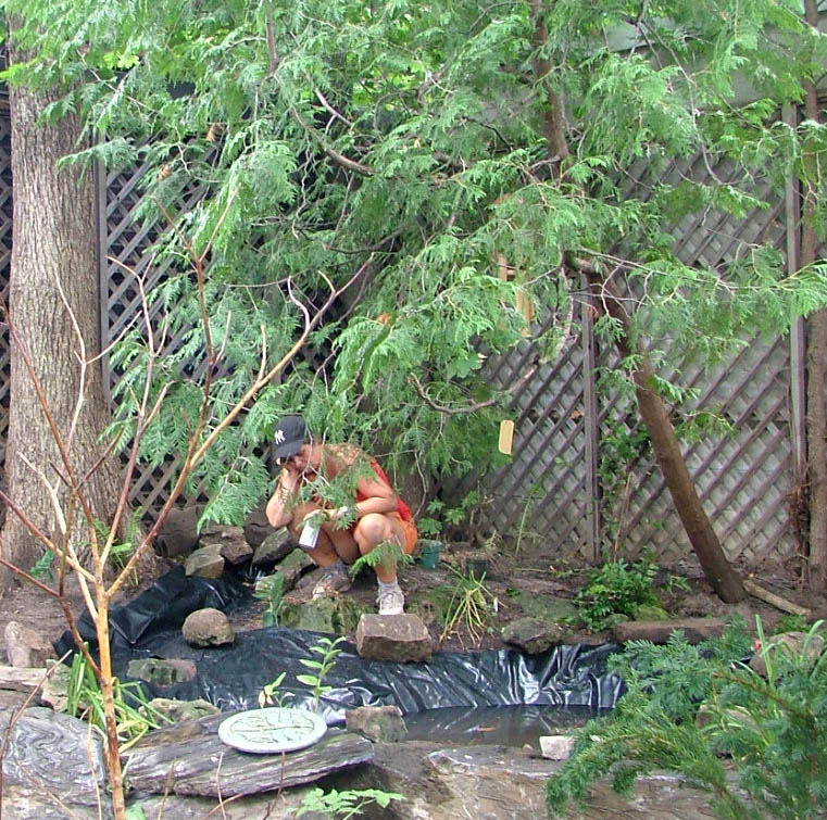 Building a backyard stream and pond: August 2010