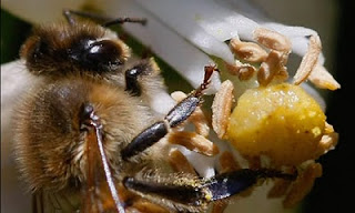 fears for crops as shock figures show scale of bee catastrophe