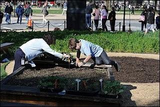 'people's gardens' springing up nationwide
