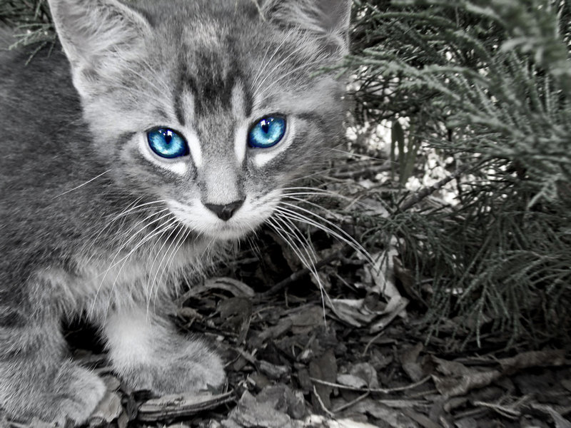 The warrior cats: July 2010