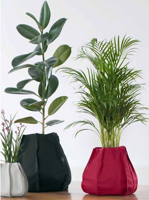 Piante Da Appartamento Ficus.Piante Da Interno Ficus Elastica Blossom Zine Blog