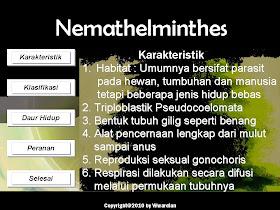 Nemathelminthes biologi. Kingdom Animalia: Phylum Platyhelminthes hpv impfung jungen pro und contra