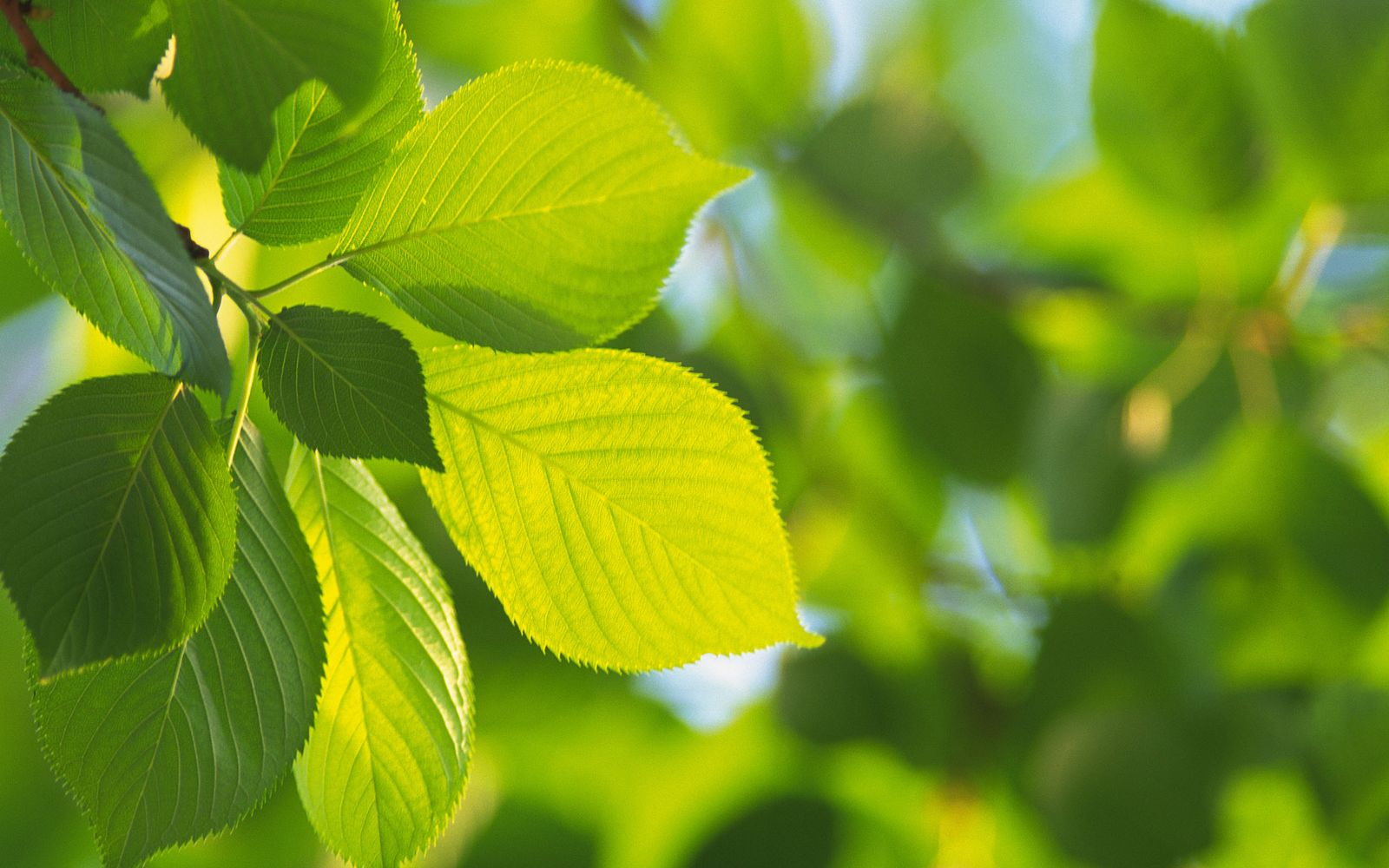 Green Leaves And Green Backgrounds