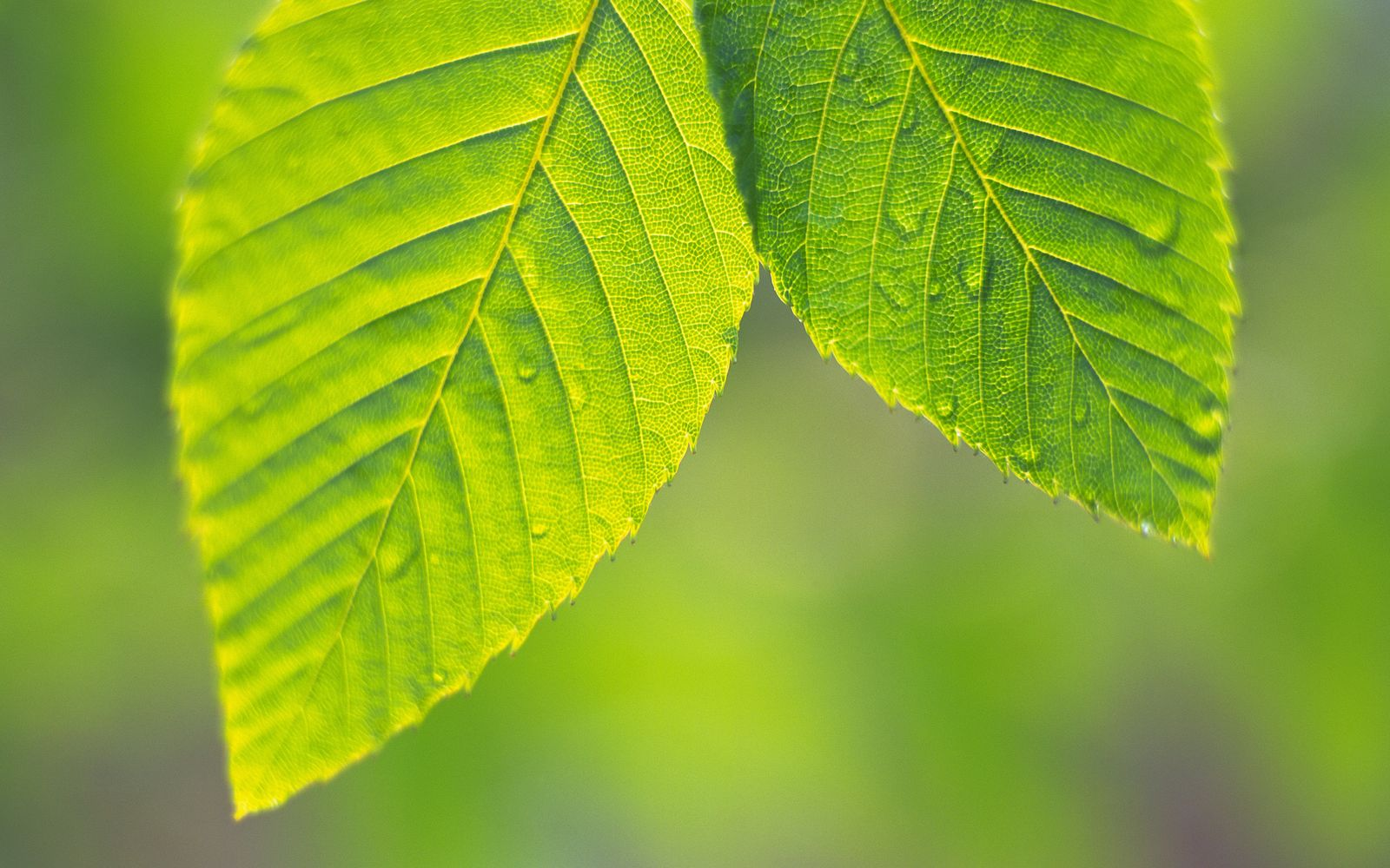 Background Wallpaper Quotes Green Leaves And Green Backgrounds