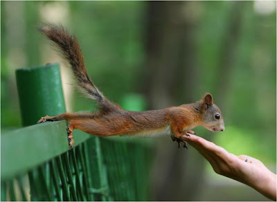 Cute Love Quotes Wallpaper For Mobile Beautiful Squirrels Wallpapers Free Download