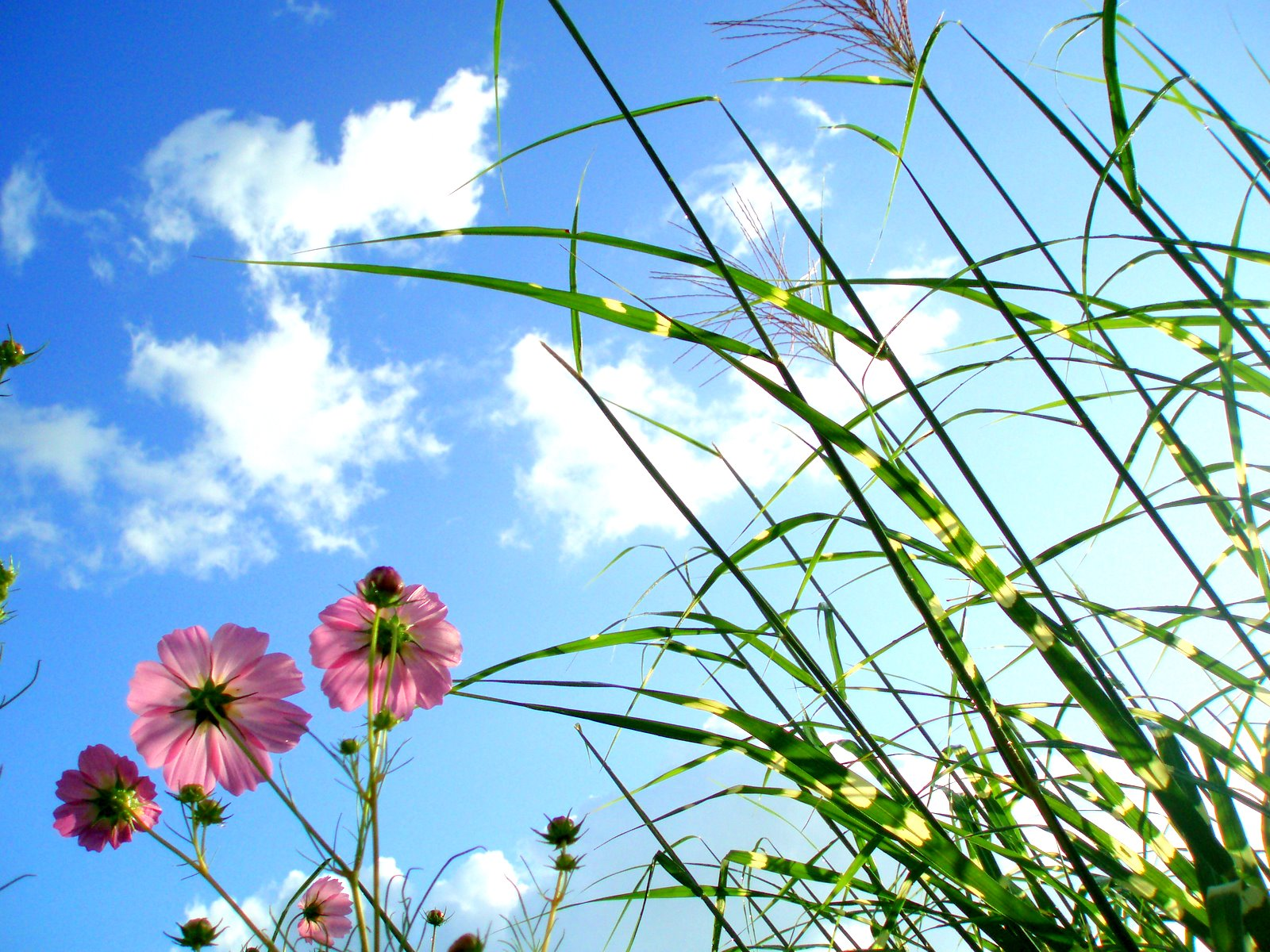 Beautiful Wallpaper Boy And Girl Beautiful Flowers In Sky Background