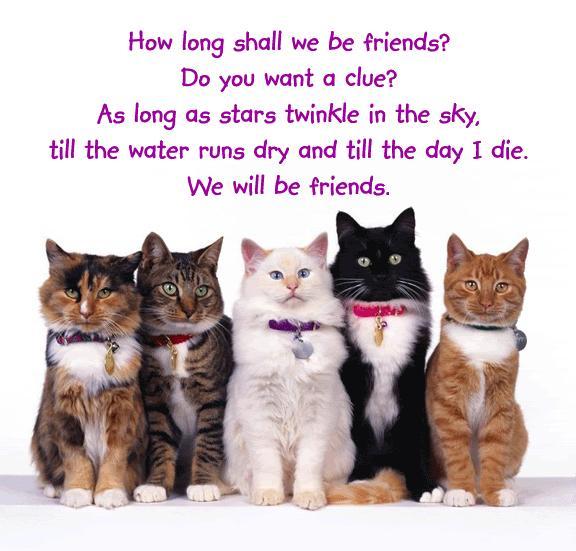 Dnevnik Jedne Filozofkinje Izreke O Prijateljstvu