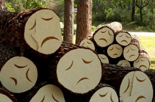 sad+trees.jpg
