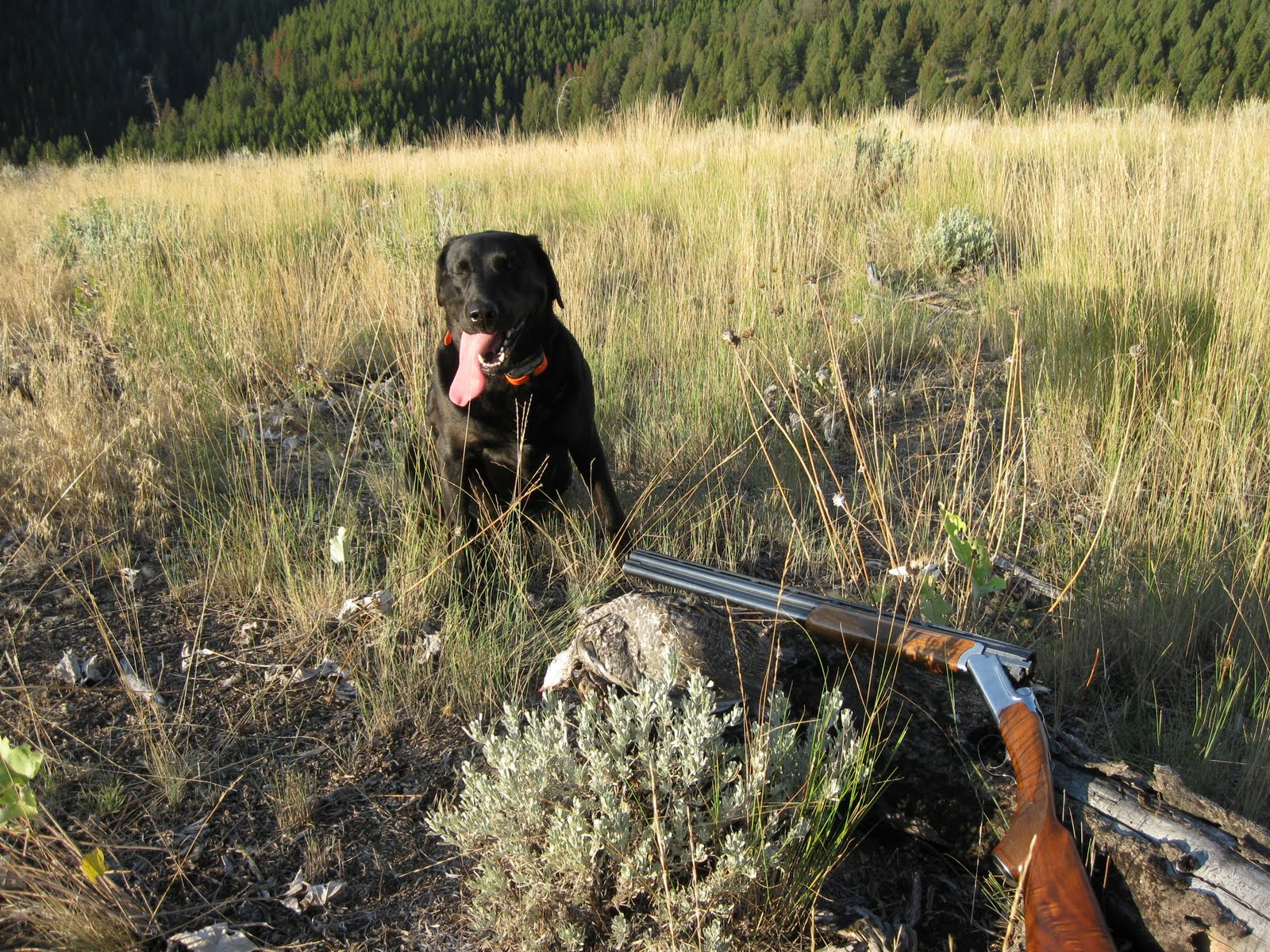 Blue Grouse Hunting