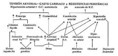 Fisiopatologia de la hta