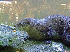 Otters live in the valley