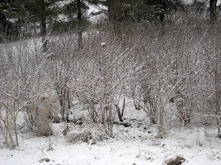 Snow On First Day Of Spring Makes Me >> Welcome Spring Julie Lefebure