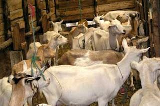 Bienestar animal y calidad alimentaria