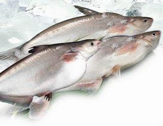 Los Panga son pescados de nueva GENERACION
