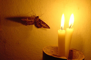 Moth and Candle Flame