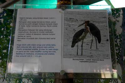 Biodiversity Singapore: Tanjung piai - Johor National Park