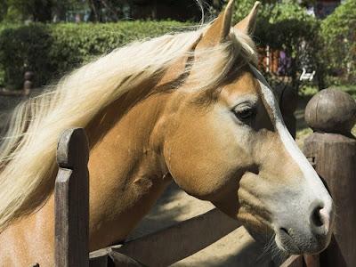 jenis kuda