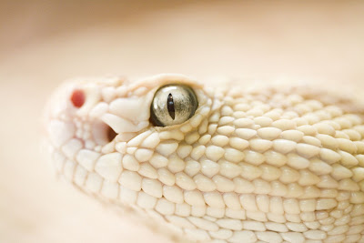 She Had Those Certain Kind of Rattlesnake Eyes by Thomas Hawk from flickr (CC-NC)