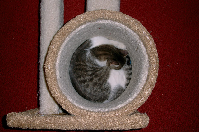 kitten geometry by tizzie from flickr (CC-NC-SA)