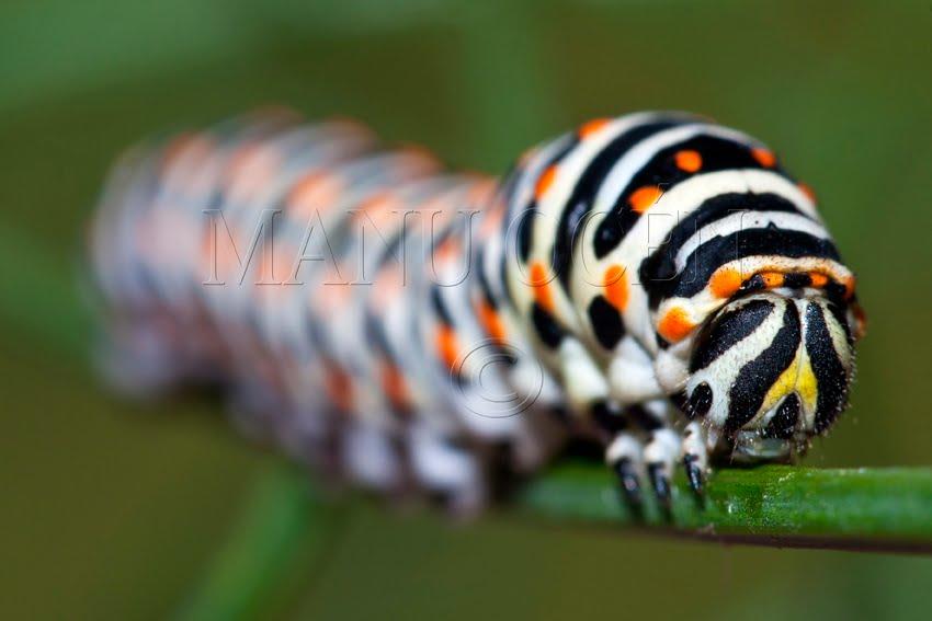imagenes de los insecto mas bellos del mundo  Taringa