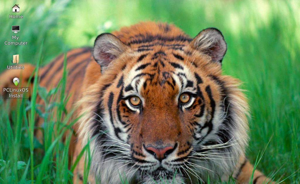 Увиденный во сне тигр сулит как успех в начинаниях, так и опасность от недоброжелателей, пытающихся вам навредить.