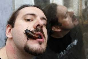 record-scarafaggi