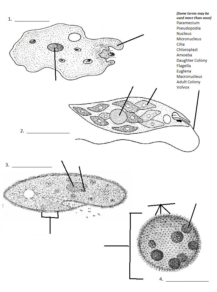 beautiful viruses bacteria protists and fungi