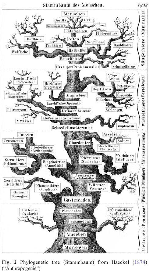Coleopterists Corner: A history of coleopterology