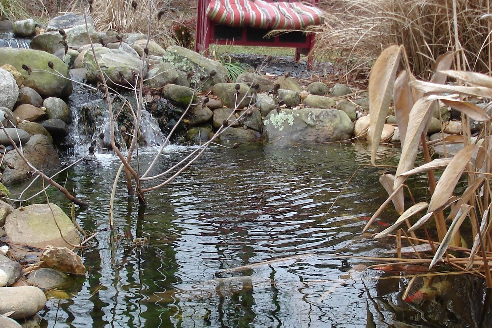 What Plants Can I Put Around My Pond