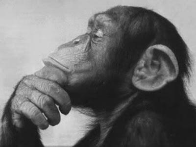 maimuta gandind
