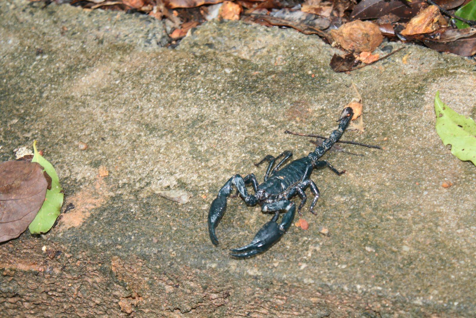 Scorpion Bite On Foot
