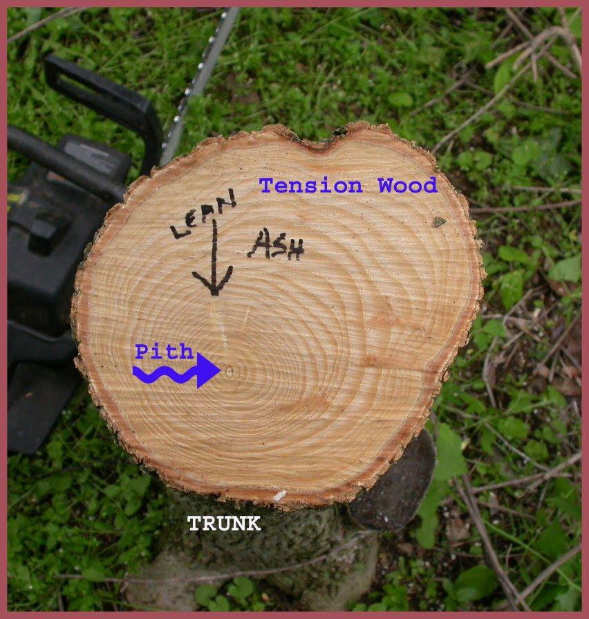 A bodger s reaction wood