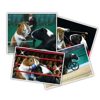 Porquinho-da-Índia - Jogos Olímpicos