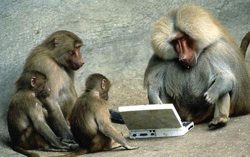 hilarious monkeys - photo #25