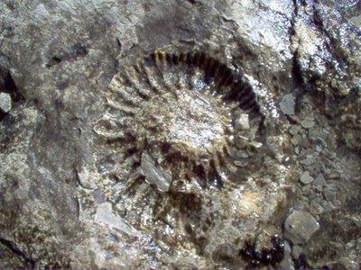 Flor fóssil
