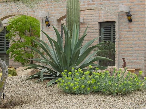 modern desert landscaping plants